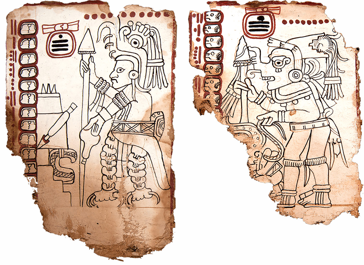 Pages from the Maya Codex of Mexico